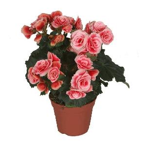 Комнатные цветы заказ саратов где купить цветы недорого в москве в свао